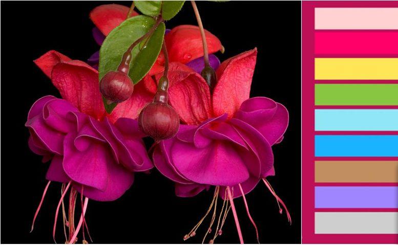 fusya-rengi-mutfak-dekorasyonu-2